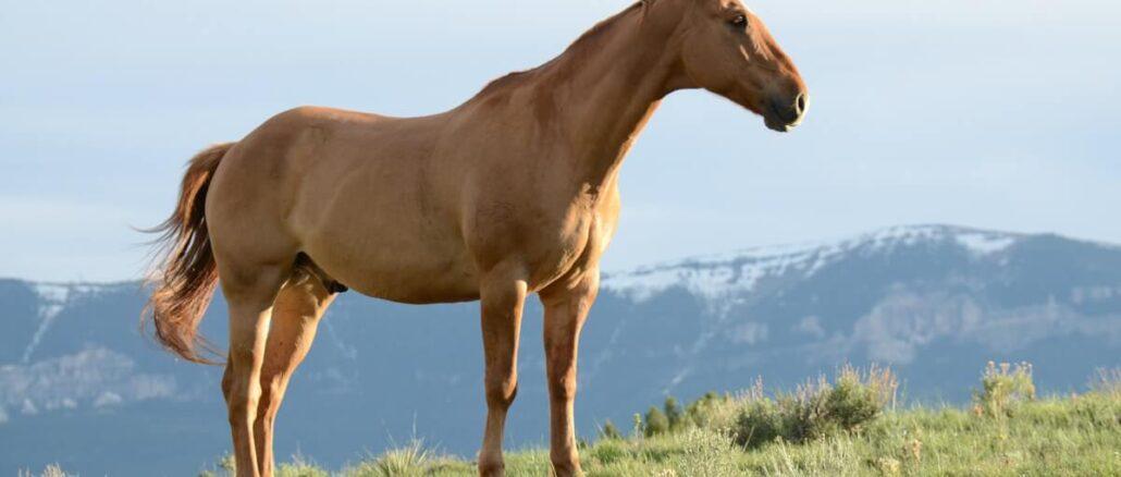 Att äga en häst
